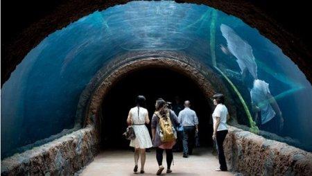 Парк «Речное сафари»